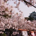 Castle over cherry blossoms