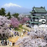 Castle and Cherry Blossoms